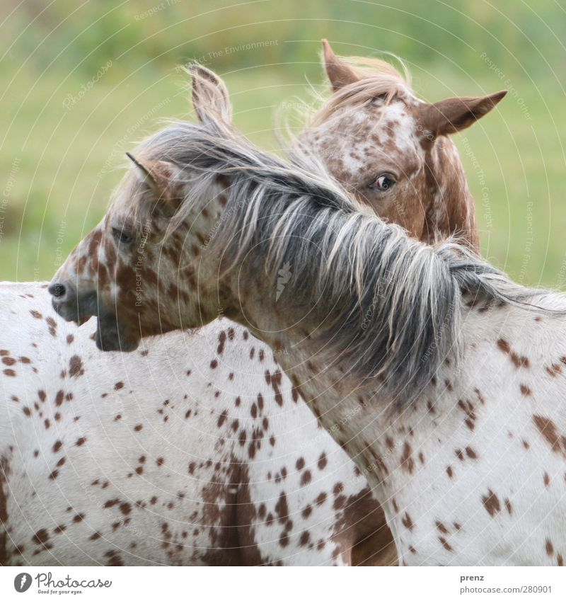 Nibbling Squad II Environment Nature Animal Farm animal Horse 2 Head Looking Pinto Mane Colour photo Exterior shot Deserted Day Animal portrait
