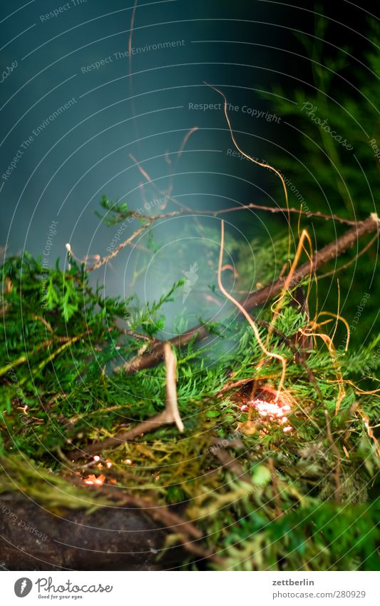 fiery Garden Night life Environment Nature Plant Summer Climate Warmth Leaf Foliage plant Park Hot Dangerous Transience Fire Thuja Branch Twig Burn Spark Smoke