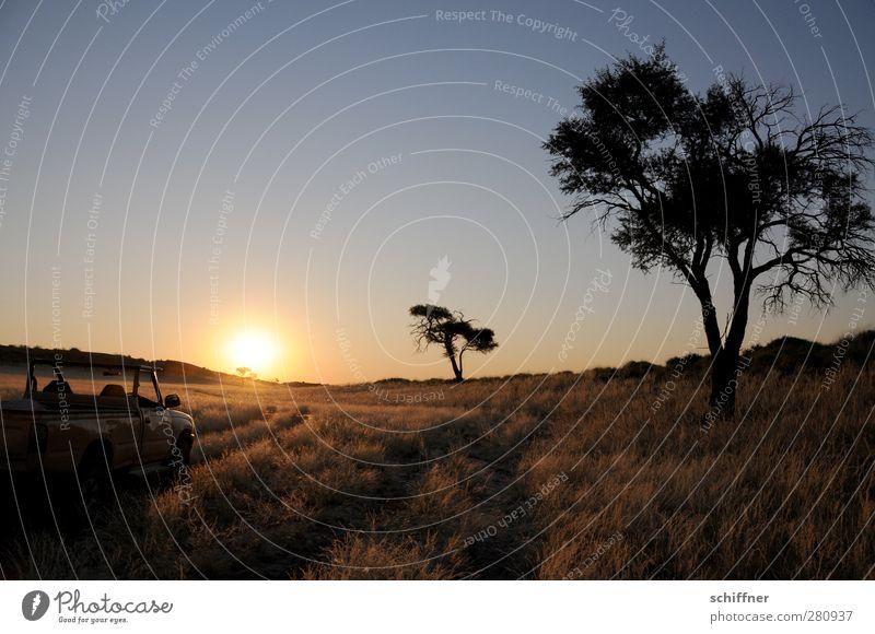 sundowning Environment Nature Landscape Plant Cloudless sky Sun Sunrise Sunset Sunlight Tree Grass Desert Calm Steppe Silhouette Back-light Safari Namib desert
