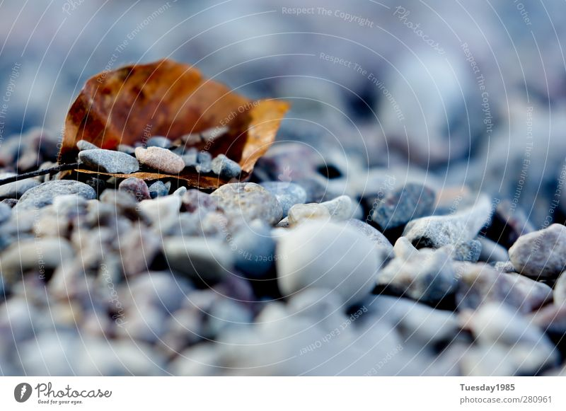 Nature Plant Summer Water Leaf Far-off places Autumn Coast Wood Happy Stone Sand Contentment Elements Lakeside Belief