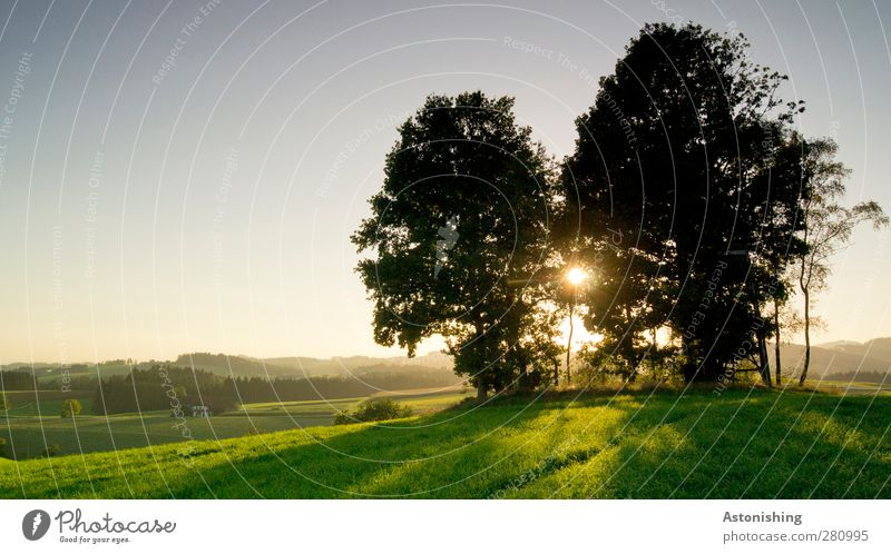 on the hill Environment Nature Landscape Plant Air Sky Cloudless sky Sun Sunrise Sunset Sunlight Summer Weather Beautiful weather Warmth Tree Grass Meadow