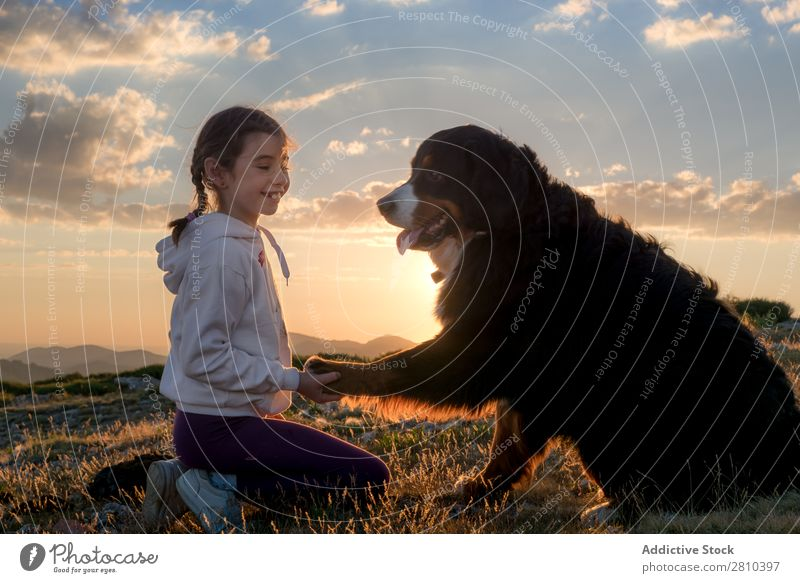 Beautiful little girl and her dog playing at sunset together Girl Dog Happy Sunset big Green Love Pet Youth (Young adults) Grass Together Child Landscape