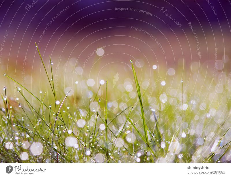 don't worry, there are miracles happening... Nature Meadow Glittering Fresh Calm Dew Drops of water Blade of grass Beautiful Autumn Subdued colour Exterior shot