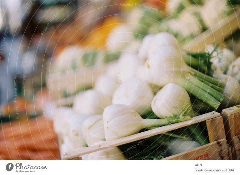 Fresh fennel Food Vegetable Fennel Nutrition Organic produce Vegetarian diet Healthy Green White Greengrocer Markets Sell Box of fruit Colour photo