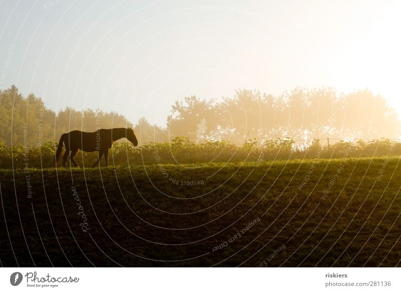 where is the journey going? Environment Nature Landscape Sunrise Sunset Sunlight Autumn Fog Meadow Field Hill Animal Pet Horse 1 Going Hiking Emotions Brave