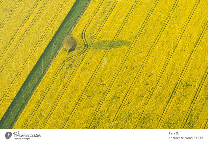 divergence Agriculture Forestry Environment Plant Spring Beautiful weather Tree Grass Agricultural crop Canola Field Line Arch Esthetic Infinity Warmth Yellow