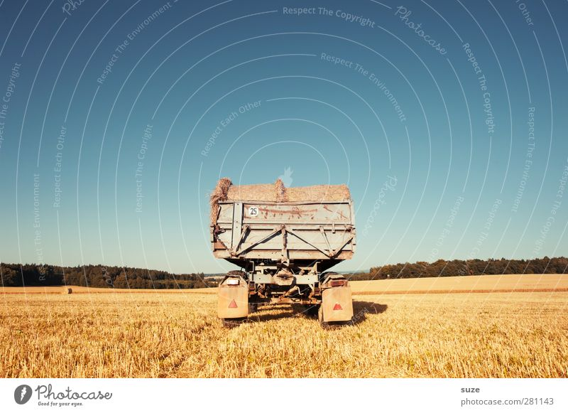 appendix Grain Summer Agriculture Forestry Environment Nature Landscape Sky Horizon Beautiful weather Warmth Agricultural crop Field Vehicle Truck Trailer