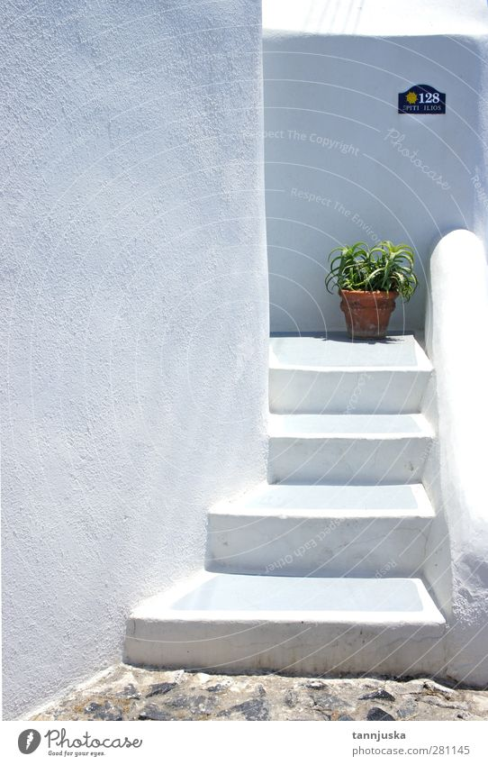 Santorini pot Nature Vacation & Travel Beautiful Green White Plant Colour Summer Loneliness Flower House (Residential Structure) Architecture Building Small Style Stone