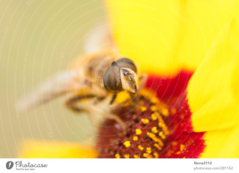 Nature Summer Plant Red Flower Animal Environment Yellow Eyes Meadow Blossom Fly Beautiful weather Wing Insect Bee