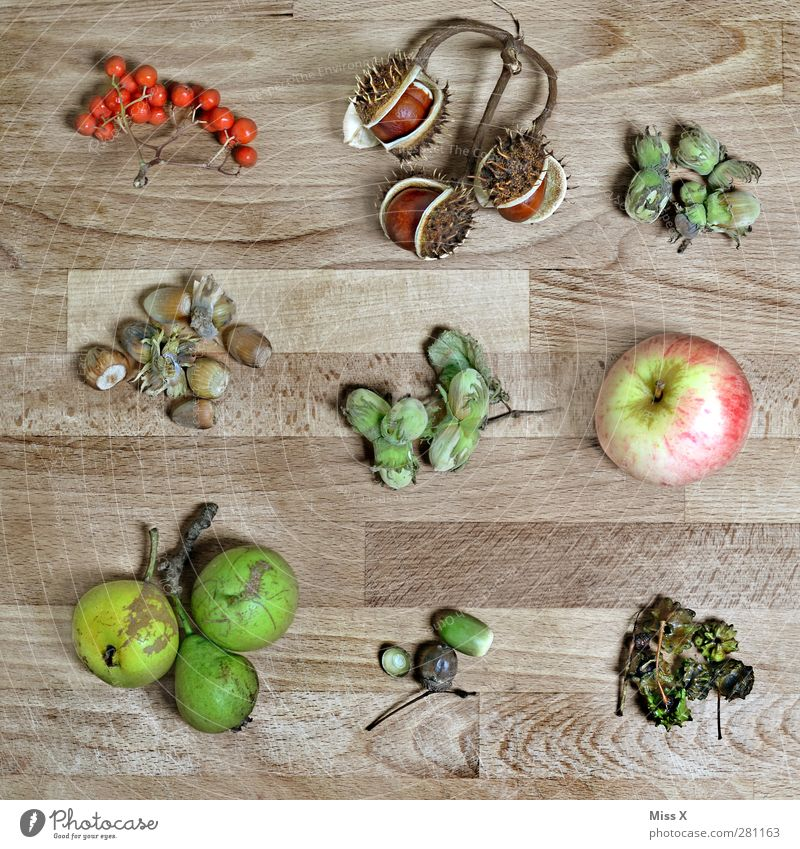 autumn collection Food Fruit Apple Nutrition Autumn Leaf Brown Multicoloured Pear Wood Collection Acorn Hazelnut Berries Rawanberry Chestnut Autumnal