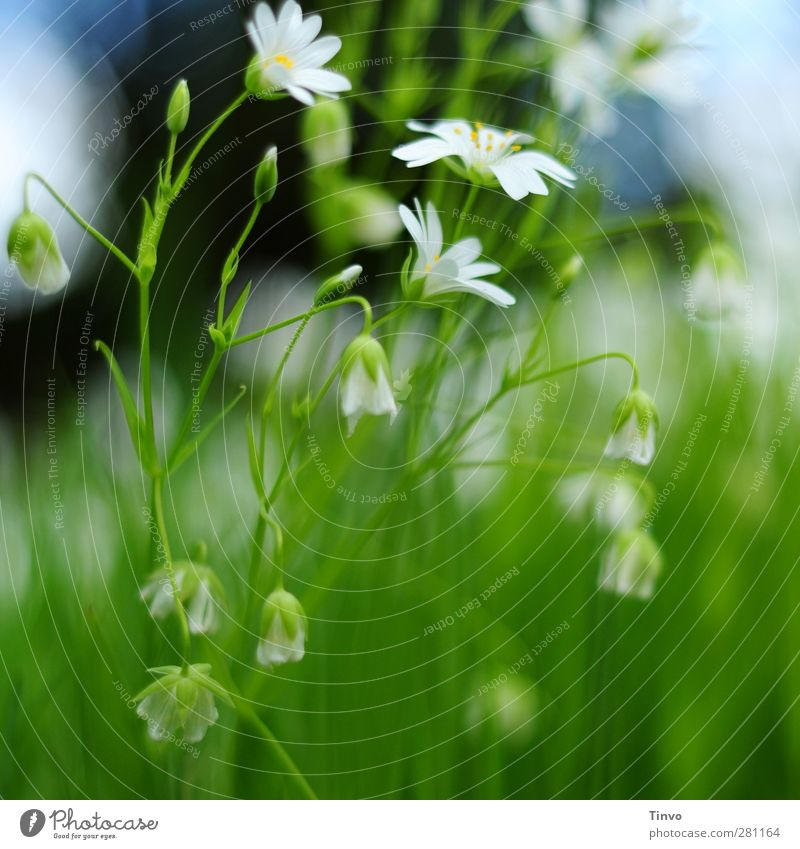 Happy birthday to Lu! Nature Plant Spring Summer Beautiful weather Flower Grass Blossom Wild plant Happiness Fresh Small Blue Green White Delicate Light green