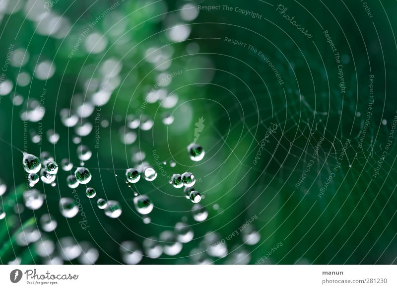 water pearls Nature Animal Drops of water Rain Spider's web Reticular Illuminate Authentic Simple Glittering Small Wet Green Esthetic Delicate Fine Suspended