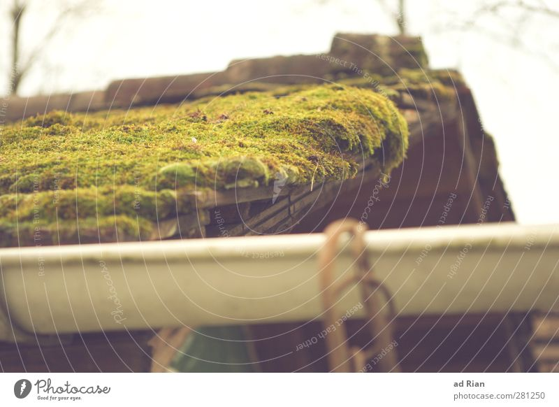 moss village Nature Cloudless sky Autumn Bushes Moss Park Old town Roof Eaves Wet Natural Growth Colour photo Exterior shot Worm's-eye view