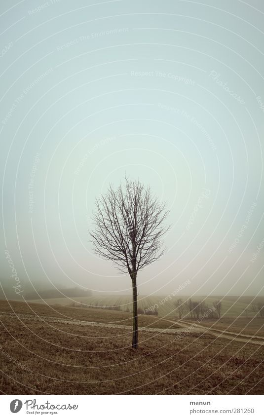 Sky Nature Tree Loneliness Calm Winter Landscape Meadow Cold Autumn Field Natural Fog Authentic Gloomy Bleak