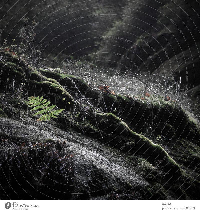 Nature Plant Environment Dark Above Germany Rain Weather Natural Glittering Wild Growth Tall Wet Fresh Idyll