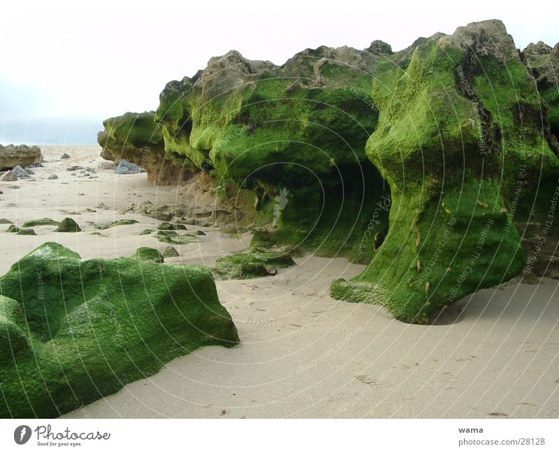 Green Stones Algae Ocean Portugal Low tide Rock