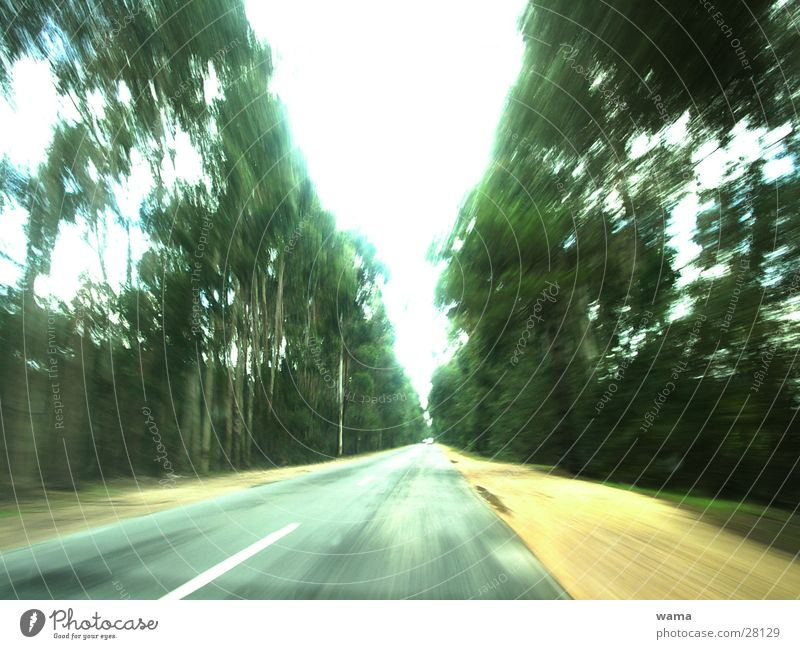 road trip Country road Portugal Speed Asphalt Tree South Driving Transport Vacation & Travel Joy View from the car Dynamics