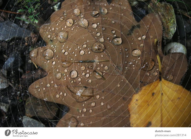 Condensation on a leaf Plant Earth Drops of water Autumn Tree Leaf Nature moisture Ground Colour photo Close-up Deserted Dawn