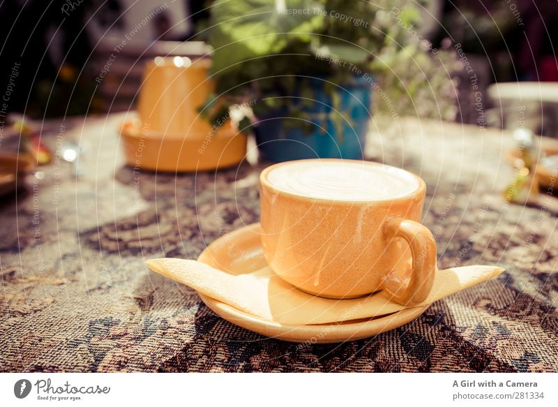 coffee in Tallinn Food Beverage Hot drink Coffee Cappuccino Crockery Cup Yellow To have a coffee Relaxation Full Multicoloured Decoration Exterior shot Close-up