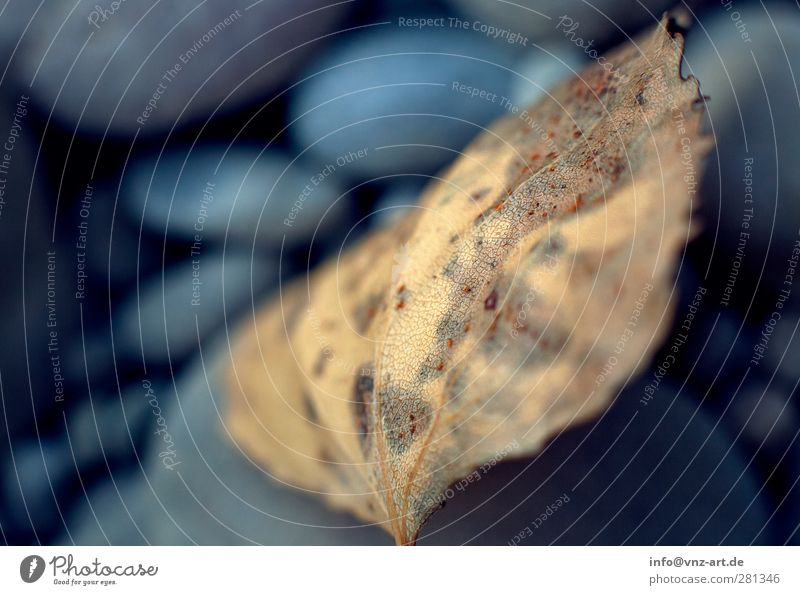 autumn Environment Nature Climate Weather Leaf Blue Brown Yellow Gold Calm Autumn Autumnal Colour photo Exterior shot Macro (Extreme close-up) Deserted Blur