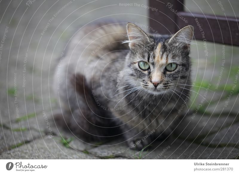 Cat Animal Calm Gray Baby animal Small Think Natural Infancy Contentment Sit Authentic Cute Observe Soft Curiosity