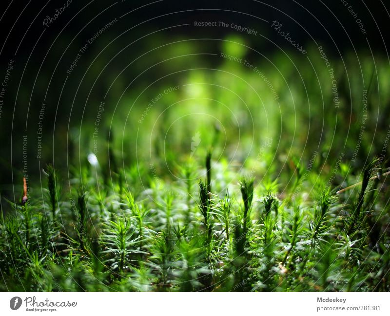 Nature Green White Summer Plant Sun Black Landscape Forest Environment Life Grass Natural Growth Authentic Fresh