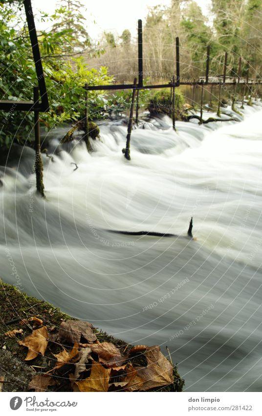 cong river Bridge Environment River Flow Broken Long exposure Leaf Autumn leaves Colour photo Exterior shot Experimental Copy Space right Motion blur