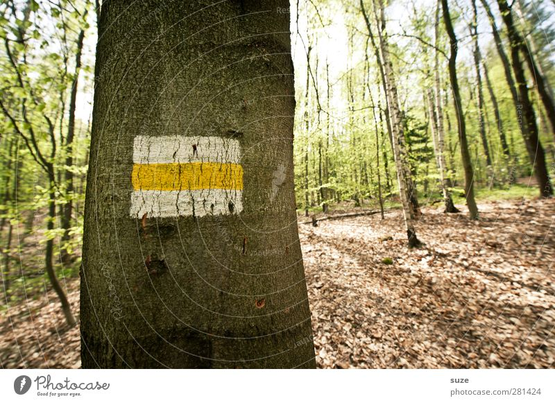 Nature Green Summer Tree Landscape Forest Environment Dark Cold Brown Leisure and hobbies Growth Signs and labeling Beautiful weather Stripe