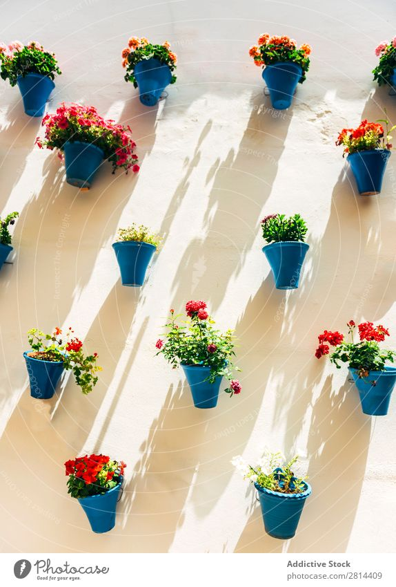 Flowerpots and colorful flower on a white wall, in Cordoba, Spain Wall (building) Garden Exterior shot Green Vacation & Travel Historic Old Village Tradition