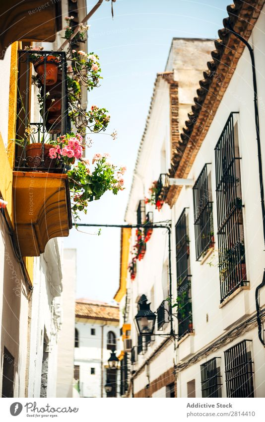 Street of jewish quarter in Cordoba, Spain Old Walking Exterior shot Narrow Town Flower