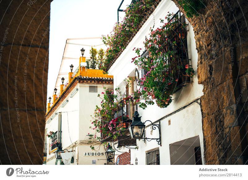 Street of jewish quarter in Cordoba, Spain cordova Old Walking Exterior shot Narrow historical Town Flower White Vacation & Travel Vantage point Neighborhood