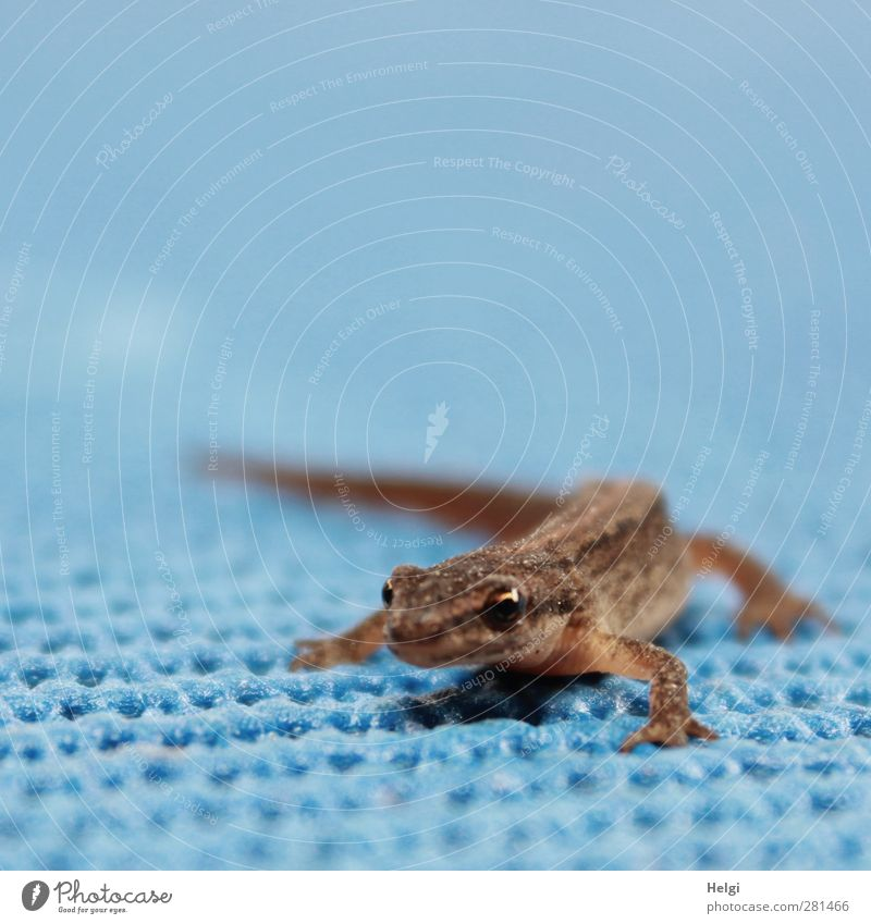 You got a nice, crooked posture. Nature Animal Summer Wild animal Lizards Reptiles 1 Plastic Observe Looking Stand Wait Esthetic Exceptional Small Natural Blue