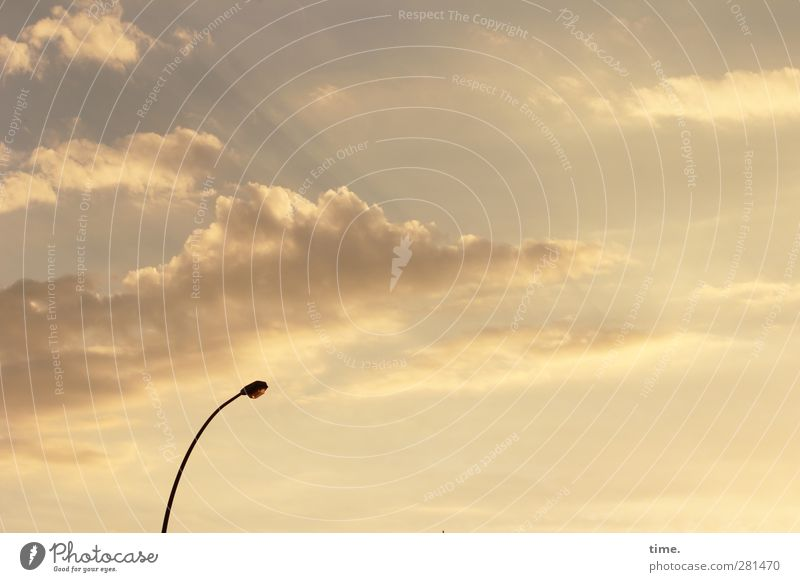 Sky Clouds Calm Far-off places Design Serene Thin Street lighting Services Caution Patient Humble Crooked Dependability