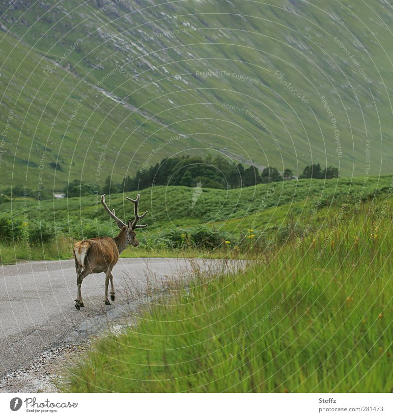 Nature Green Calm Animal Freedom Going Wild Idyll Wild animal Transport Hill Serene Valley Pedestrian Scotland