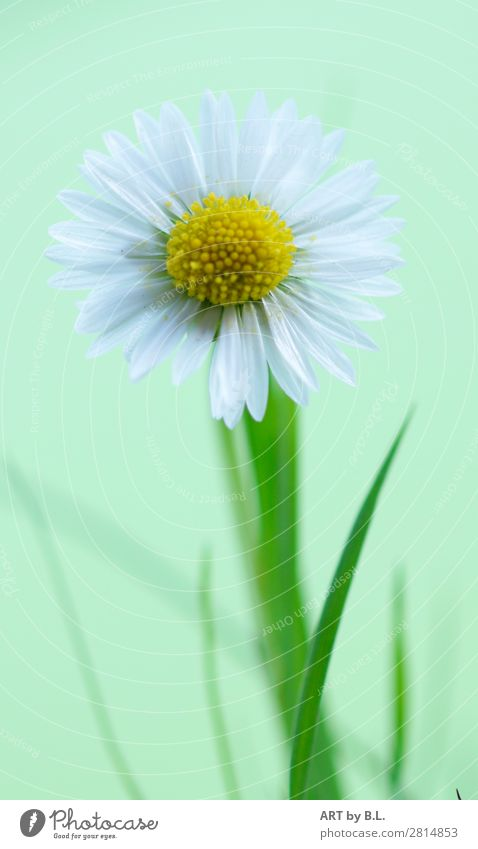 Nature Summer Plant Green White Flower Joy Healthy Autumn Yellow Environment Blossom Spring Natural Happy Small
