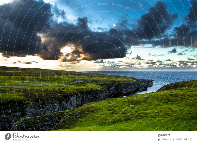 Gorge to Smoo Cave with flock of sheep at Durness in Scotland Atlantic Ocean Vantage point Canyon Twilight turniness River Great Britain Herd Highlands Cliff