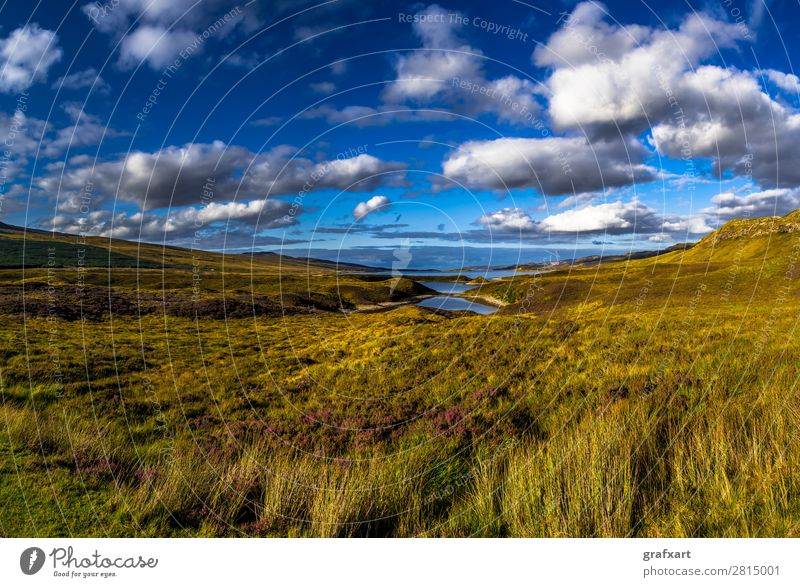 Landscape near Loch Eriboll near Durness in Scotland Atlantic Ocean Flower turniness Loneliness Great Britain Heather family Highlands Sky Background picture