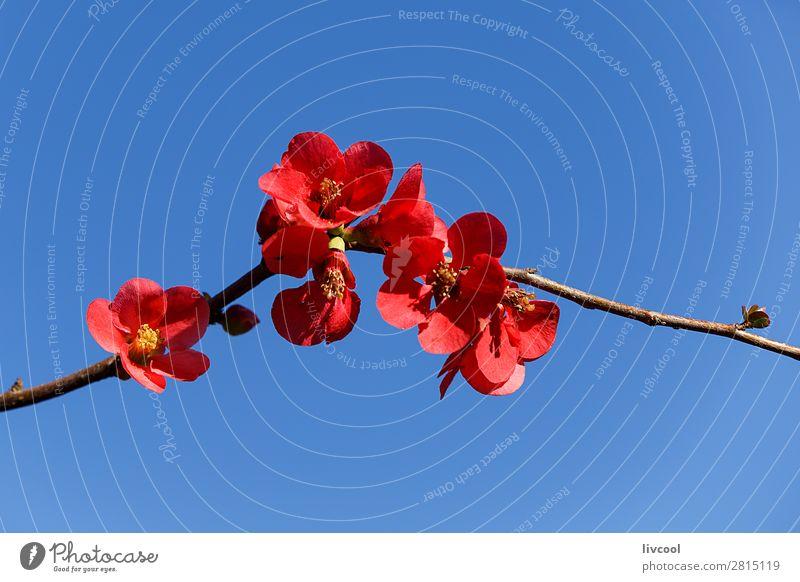 kusa-kobe Sky Nature Plant Blue White Sun Tree Flower Calm Lifestyle Love Blossom Spring Emotions Happy