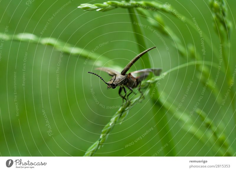 Bug on grass Green Black Grass Wing Insect Antenna