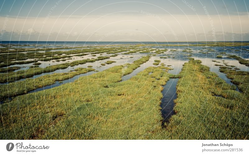 Meadow & Water Environment Nature Landscape Exceptional Infinity North Sea Islands Inundated Deluge Low tide High tide Horizon Gutter mandø Denmark Green Blue