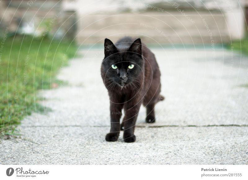 Cat Beautiful Animal Black Dark Eyes Lanes & trails Moody Exceptional Stairs Wild animal Elegant Stand Esthetic Cute