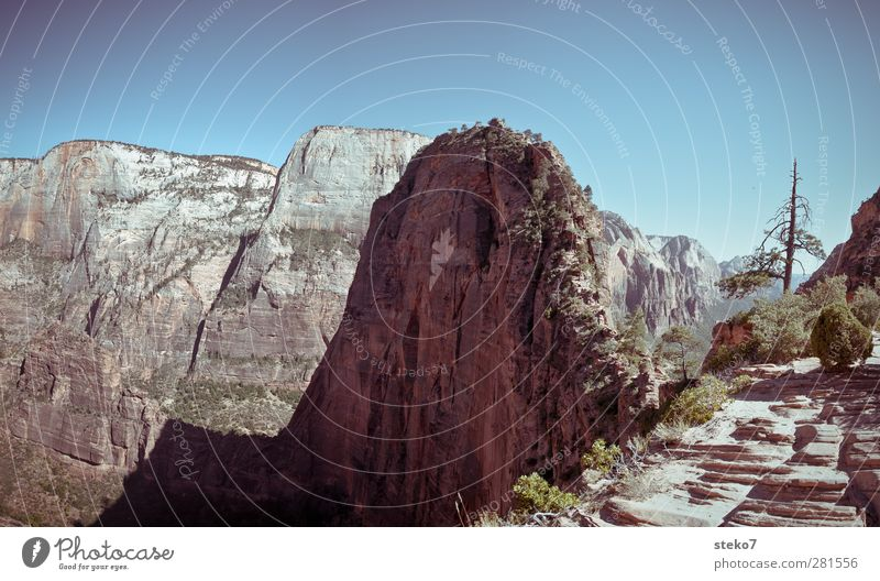 Angels Landing Cloudless sky Beautiful weather Flower Mountain Peak Tall Blue Brown Green Far-off places Zion Canyon Mountain ridge Steep Steep face