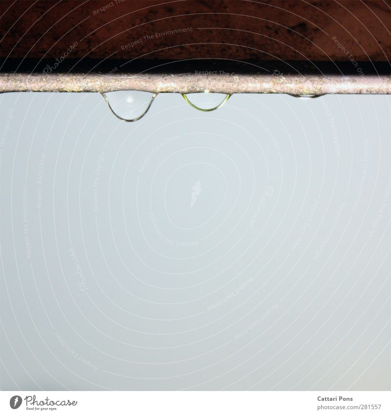trickle Water Drops of water Cloudless sky Bad weather Rain Hang Simple Fluid Fresh Cold Small Near Wet Natural Eaves Colour photo Exterior shot Close-up Day