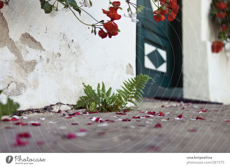 In front of the door House (Residential Structure) Plant Flower Fern Geranium Wall (barrier) Wall (building) Door Blossoming Faded Ground Tradition