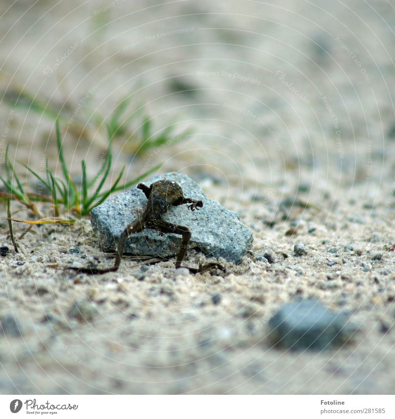 cycle of life Environment Nature Plant Animal Elements Earth Sand Grass Wild animal Frog Bright Death Shriveled Colour photo Multicoloured Exterior shot