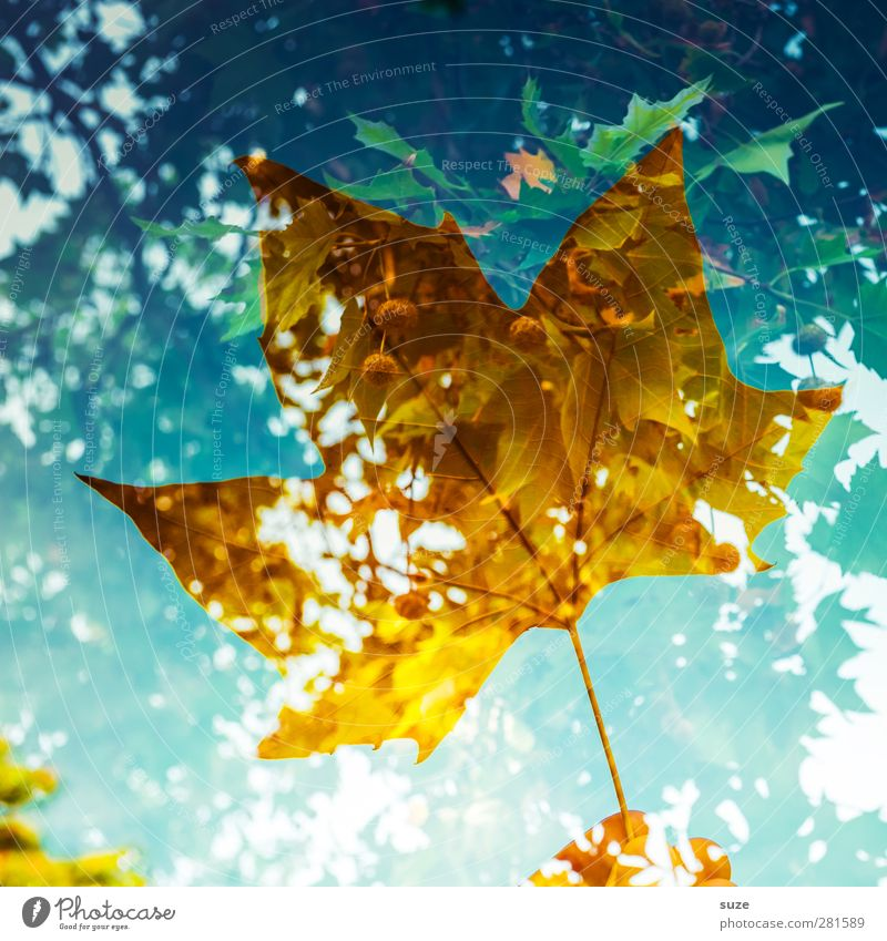 Nature Blue Plant Leaf Environment Yellow Autumn Exceptional Weather Esthetic Creativity Individual Transience Seasons Stalk Transparent