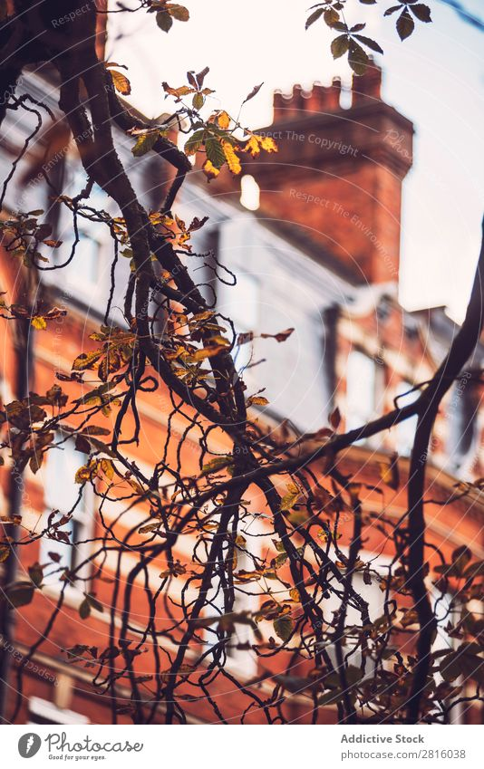 Close-up brunch on the background of brick building. Branch Building London Tree Plant Autumn House (Residential Structure) Brick Architecture Red Flat