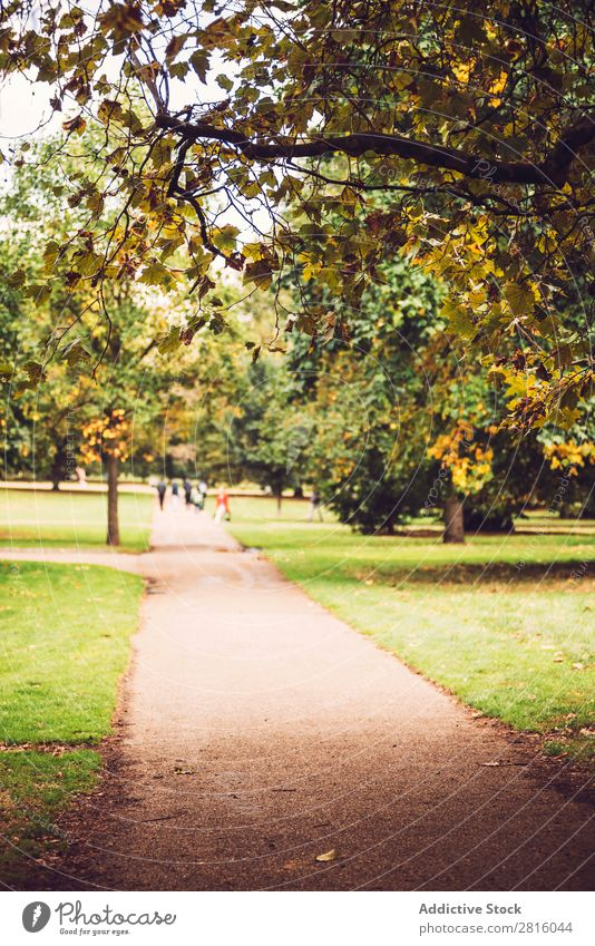 Autumn in Hyde Park, London. Alley City Nature Tree England Beautiful Tourism Attraction Yellow Green Multicoloured Lanes & trails Grass Leaf Walking scenery