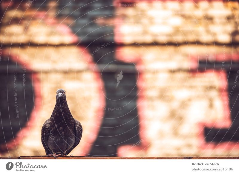 Pigeon against the wall Graffiti Wall (building) London Street Bird Deserted Brick
