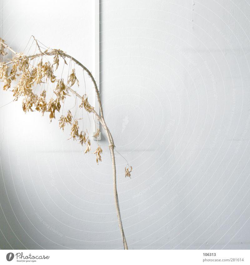 "<FONT COLOR=""#FFFF00"">-==- SYNC:ßÇÈÂÈPlant Foliage plant Fatigue Perturbed Shriveled Dried Death Past Houseplant Cast Office lack of water To dry up"